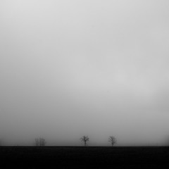 Vanishing Landscape 010 (noahbw) Tags: trees sky blackandwhite bw mist snow storm abstract monochrome weather silhouette misty fog square landscape blackwhite spring still nikon quiet natural farm horizon foggy stormy minimal minimalism stillness d5000 noahbw