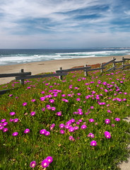 Point Reyes Ice Plant (Tony Immoos) Tags: ocean california green beach clouds fence coast sand pacific scenic olympus iceplant marincounty pointreyes e3 seashore daytrip pointreyesnationalseashore californialandscape happyhours olympuse3 918mm
