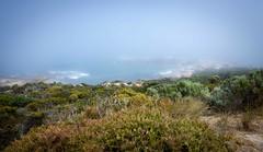 Foggy day (jotxam) Tags: ocean sea mist seascape beach water grass fog strand landscape coast countryside sand meer wasser nebel oz dune australia mysterious gras australien landschaft southaustralia downunder dne kste beachport mysteris