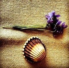 Waiting for Summer. (saraianni) Tags: summer primavera spring estate violet natura fiori viola vita futuro stagioni profumodestate