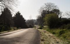 Road (Lionelcolomb) Tags: road sky sun france tree nature golf landscape route arbres vendée