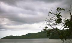 _MG_5035 (Rickard Nilsson) Tags: ocean travel sea plant tree nature leaves fiji island branch village pacific south vitilevu archipelago pacificisland pacificislands viti