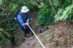 Harry going down with Providence Petrel climbing up (NettyA) Tags: man bird person australia hike nsw hiker ropes day6 bushwalk unescoworldheritage descending lordhoweisland 2016 lhi ropework bushwalker mtgower providencepetrel janetteasche lordhoweforclimate mtgowerclimb