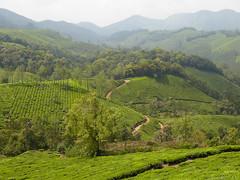 Tea plantation track (Jackie & Dennis) Tags: kerala munnar nilgiri teaplantations rwh ramblersworldwideholidays