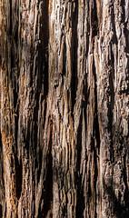 Sequoia bark- Happy Texture Tuesday (randyherring) Tags: california park ca tree nature closeup us afternoon unitedstates outdoor saratoga treetrunk santacruzmountains sequoia sequoiadendron sanborncountypark santaclaracountyparks sequoiapetersongrove