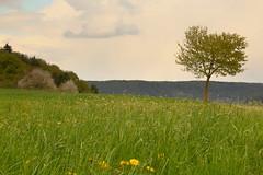 Spring (ggallenb) Tags: sky flower tree wiese himmel blume grassland baum