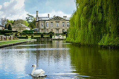 Coombe Abbey (littlesarahphotography) Tags: park uk wild lake nature water sunshine countryside spring swan wildlife country april coombeabbey