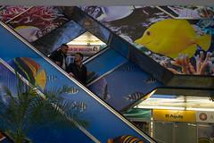 119 - abril 20 (Galo Naranjo) Tags: fish aquarium acuario pecesdecolores saladebelleza electricstairways
