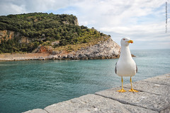 Portovenere 2016 (Pasquale Vitale) Tags: italia mare madonna liguria cinqueterre bianca sanpietro portovenere castello laspezia carrugi golfodeipoeti