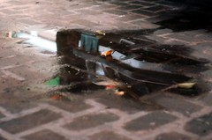 peeping camaro (chenb.reyes) Tags: reflection film water puddle lomo lomography bricks camaro