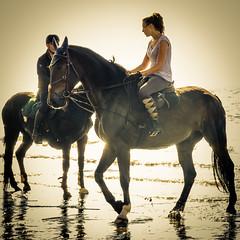 La plus belle conqute de l'homme (amateur72) Tags: plage chevaux stjouin