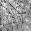 Frozen Forests 004 (noahbw) Tags: autumn trees light blackandwhite bw snow abstract cold ice monochrome forest square landscape frozen blackwhite still woods nikon quiet natural branches freezing stillness d5000 captaindanielwrightwoods noahbw