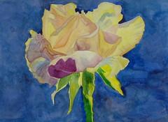Rose, by Marisa - DSC01714 (Dona Mincia) Tags: flower art nature beauty rose yellow watercolor painting paper beige arte natureza flor rosa study beleza pintura bege amarela belo aquarela