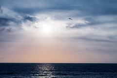 Close to the end (rickm187) Tags: blue sunset sea summer beach canon landscape seagull