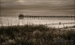 Chocolate Day (FiddleFlix) Tags: winter blackandwhite bw usa beach coast northcarolina seashore atlanticbeach niksilverefexpro oceananafishingpier