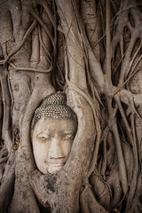 Thailand - Wat Phra Mahathat - The Buddha in the tree (Cyrielle Beaubois) Tags: tree statue stone thailand ancient ruins asia head roots thalande bouddha asie southeast ayutthaya 2015 watphramahathat canonef70200mmf40lusm canoneos5dmarkii cyriellebeaubois