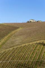 Girovagando per la campagna marchigiana (Morena AN Massacesi) Tags: campagna marche campi montecarotto