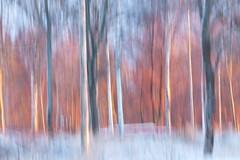 Morning light (evisdotter) Tags: morning trees winter light snow nature colors sunny icm sooc intentionalcameramovement