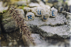 Set In Stone (hbmike2000) Tags: morning blur grass word outside typography weed nikon focus rocks paint dof bokeh stones dirty dirt shade scratched depth odc setinstone d810 hbmike2000