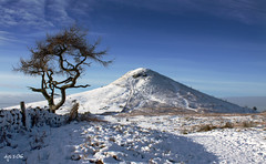 Roseberry and Tree (Dave Snowdon (Wipeout Dave)) Tags: winter snow landscape northyorkmoors northyorkshire roseberrytopping clevelandway wipeoutdave canoneos1100d davidsnowdonphotography djs2016