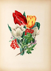 Floras dictionary (Mann Library) Tags: illustration rarebooks specialcollections posey mannlibrary floriculture languageofflowers cornelluniversitylibrary