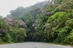 080216-_lavandario_090 (cesarconi) Tags: nature natureza estrada paulo so cunha