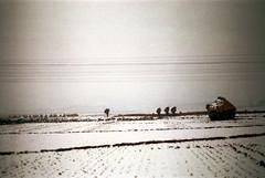 31-642 (ndpa / s. lundeen, archivist) Tags: winter people snow color building fall film field rural 35mm snowy nick korea farmland powerlines korean seoul fields thatchedroof 1970s southkorea 1972 31 dewolf thatchroof grayskies nickdewolf photographbynickdewolf reel31