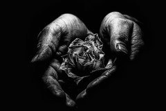 Aesthetics of Aging (Streetphotography Berlin) Tags: old blackandwhite white black rose photography photo hand symbol fineart aging
