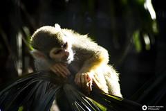 _DSC6107 (alessandro.spagnolli) Tags: zoo ngc natura tamronlens naturalistica lecornelle parcofaunistico sonyalpha77