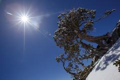 Mt.Hehuan N.Peak, Taiwan_IMG_7345 (Len) Tags: mountain snow tree landscape taiwan    gettyimages snowscape  6d  nantou   hehuanshan    mthehuan  ef1635mmf28liiusm  1635lii  hehuannorthpeak  09k   hehuannpeaktrail
