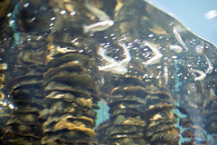 20160227-13 (GenJapan1986) Tags: film japan aquarium  miyagi  2016     nikonnewfm2 fujifilmfujicolorsuperiaxtra400