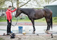 Buckskin Doll (EASY GOER) Tags: park horses sports canon belmont racing zilla thoroughbred equine 5dmarkiii
