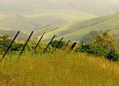 Follow the fence line (flythebirdpath > > >) Tags: ca trees fence country hills grasses scrubjay