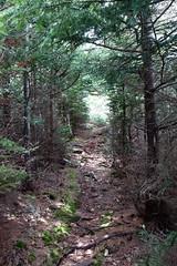 Turtle Head Trails, Islesboro, ME (Erica Robyn) Tags: new england nature woods maine trails islesboro islesboromaine
