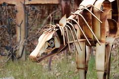 Metal Hog (jschumacher) Tags: sculpture animals upstate newyorkstate metalsculpture portjervis portjervisnewyork