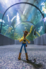 Ocearium first visit (Guic_Photographies) Tags: sea mer fish aquarium cowboy sony woody first visit disney pixar poisson photographies croisic guic a7s woodyco
