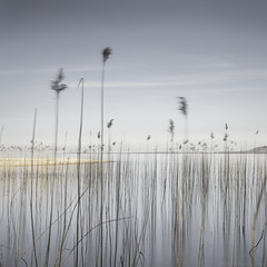le ballet arien (photofabulation) Tags: longexposure sky beach water reeds switzerland eau europa europe suisse ciel le plage roseaux vaud romandie poselongue bigstopper