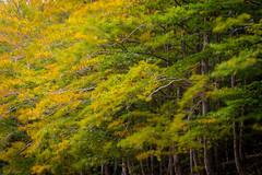 A living world (http://www.jcfajardophotography.com/) Tags: barcelona autumn espaa naturaleza santafe nature composition forest landscape spain nikon forrest doubleexposure sigma paisaje catalonia bosque otoo catalunya doubleexposition catalua composicion montseny espanya dobleexposicion parquenatural sigmalens pictorialism naturepics naturephotographer naturalparck natureimages pictorica pictoric espana cataluna d7100 nikonnature sigma70200f28os nikond7100 jcfajardo sigma70200f28dgexhsmos wwwjcfajardophotographycom httpjcfajardophotographycom