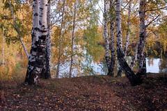 DSC_6065 (Rustam Bikbov) Tags: autumn september 2012    sverdlovskoblast