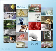 A look back at March 2016 ;o) (Elisafox22 busy this week!!) Tags: collage march photos thumbnail month 2016 elisafox22 elisaliddell2016