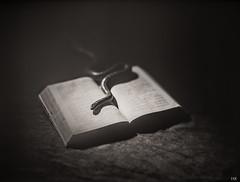 Trust me! (*altglas*) Tags: bw film monochrome sepia analog book snake bible toned rodinal150 largeformat bibel schlange 5x7 fomapan100 heiligeschrift schwarzweis 13x18 selectiveconceptualdof grosformat mentorpanorama jcoxlondon8f33
