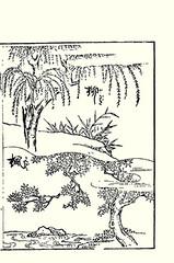 Top  willow; Bottom  Japanese maple (Japanese Flower and Bird Art) Tags: flower art japan japanese book maple picture willow acer woodblock palmatum salix ukiyo aceraceae kikuya salicaceae readercollection shichirobei