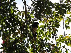 "Tikal: un oiseau ;) <a style=""margin-left:10px; font-size:0.8em;"" href=""http://www.flickr.com/photos/127723101@N04/26240393495/"" target=""_blank"">@flickr</a>"