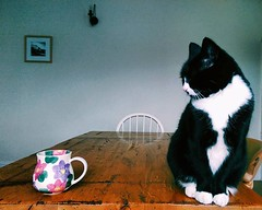 Mornings with Daisy (sophieghoyle) Tags: white black cute home cup cat table tea fluffy mug dining