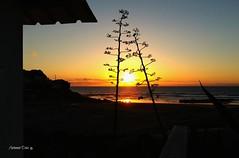 """""""Cabana"""" com vista para o mar (antoninodias13) Tags: pordosol portugal faro mar casa surf algarve praias arbustos costavicentina tonalidades"""