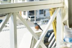 bird (uetomo9) Tags: bird fujifilm x20