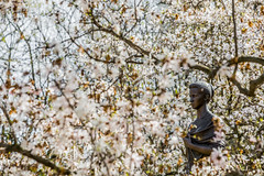east-5345 (FarFlungTravels) Tags: flowers ohio tree statue spring packing cleveland things ukraine madison rockefeller shipping martinlutherkingdrive clevelandculturalgardens bluestoneperennials