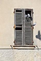 il volo (ermyale) Tags: italia uccelli volo finestra comacchio piccioni