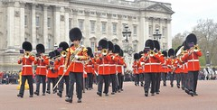 band of the scots guards /22/04/2016/ (philipbisset275) Tags: unitedkingdom centrallondon cityofwestminster spurroad englandgreatbritain bandofthescotsguards 22042016