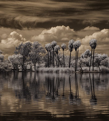 Reflected Palm Trees At Santee Lakes (Bill Gracey) Tags: trees sky water clouds reflections ir boats highcontrast surreal palmtrees infrared otherworldly santeelakes infraredphotography convertedinfraredcamera
